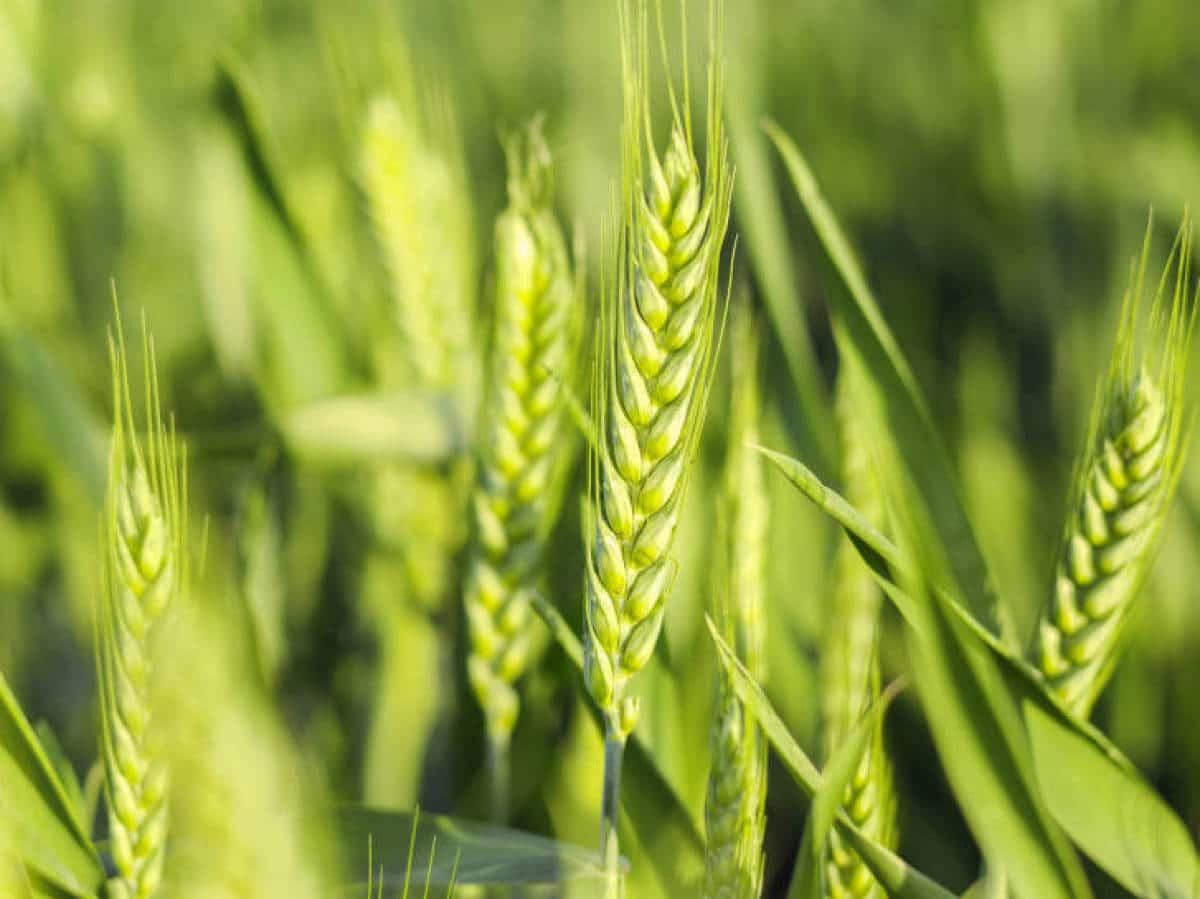 plantas en la agricultura