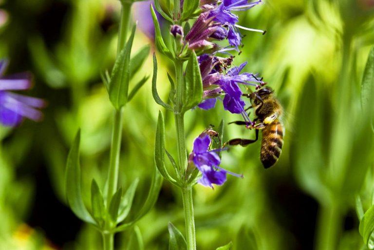 plantas repelentes de insectos