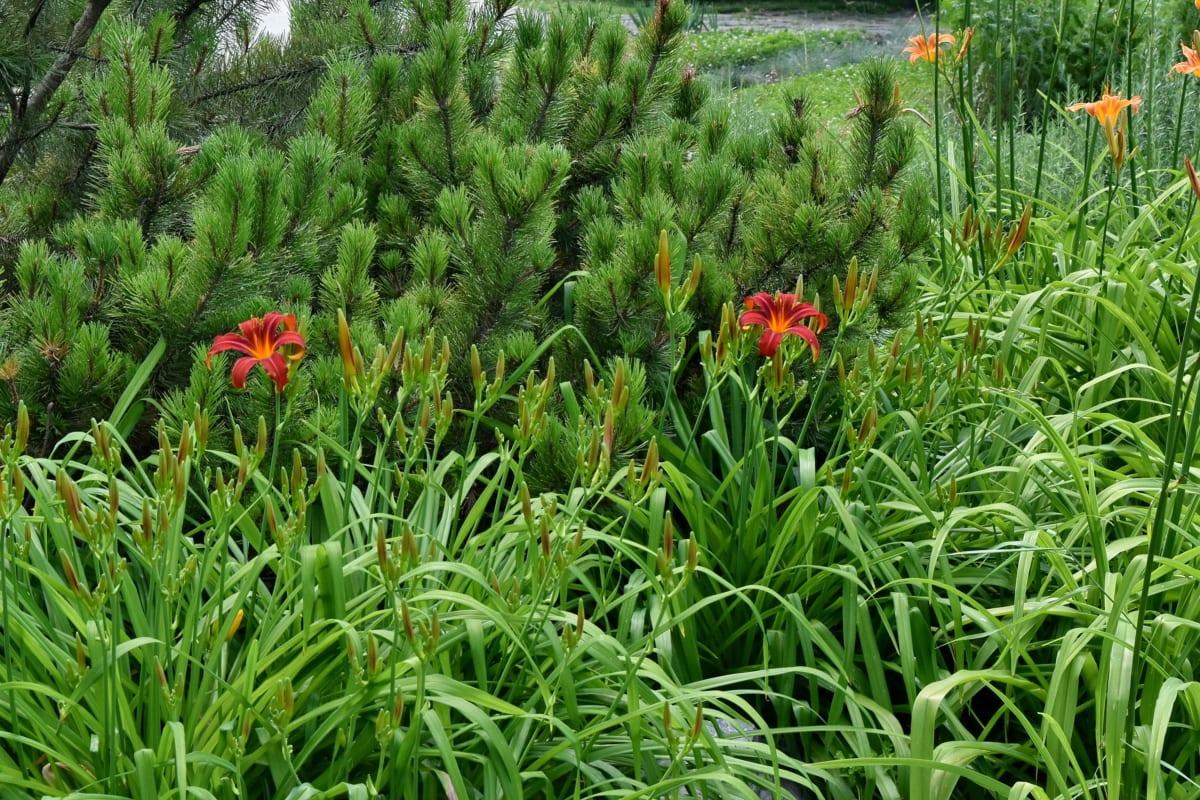 La competencia entre plantas puede hacer que sus tallos se doblen