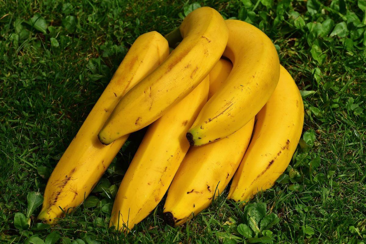 Los plátanos son comestibles