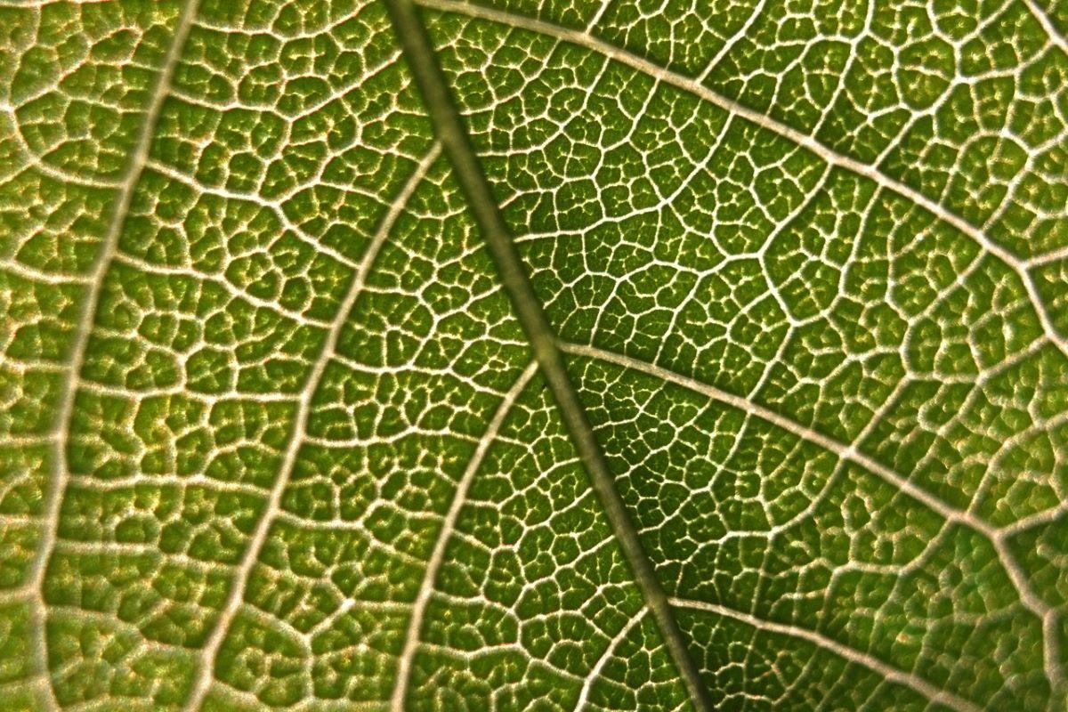La fotosíntesis la realizan los cloroplastos