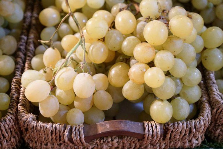 Cómo germinar semillas de uva