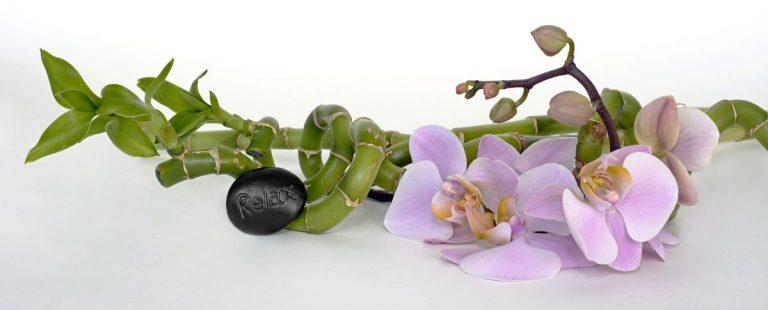 Plantas de la buena suerte según el feng shui
