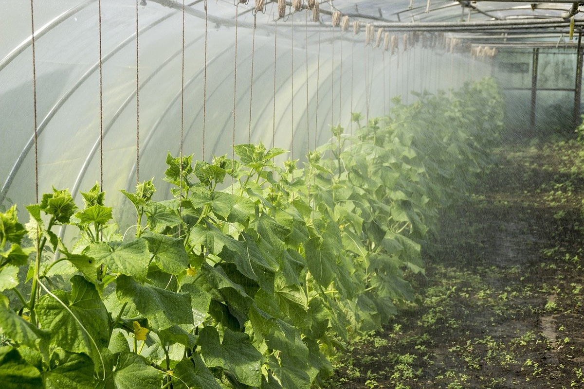 El ácido fosfórico agrícola es muy importante para el enraizamiento y la floración de las plantas