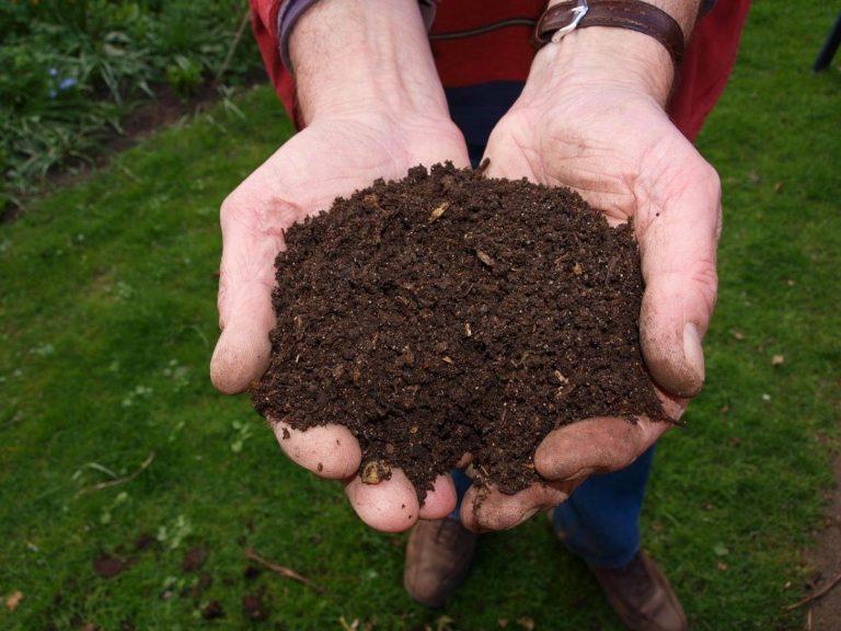 El abono orgánico es ideal para la mayoría de plantas