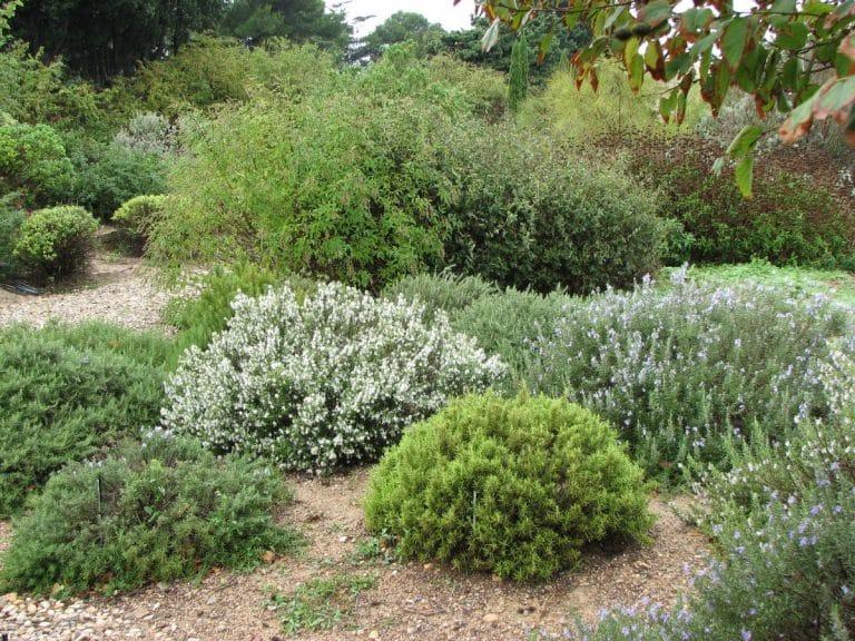 Los arbustos mediterráneos son aquellos que resisten la sequía