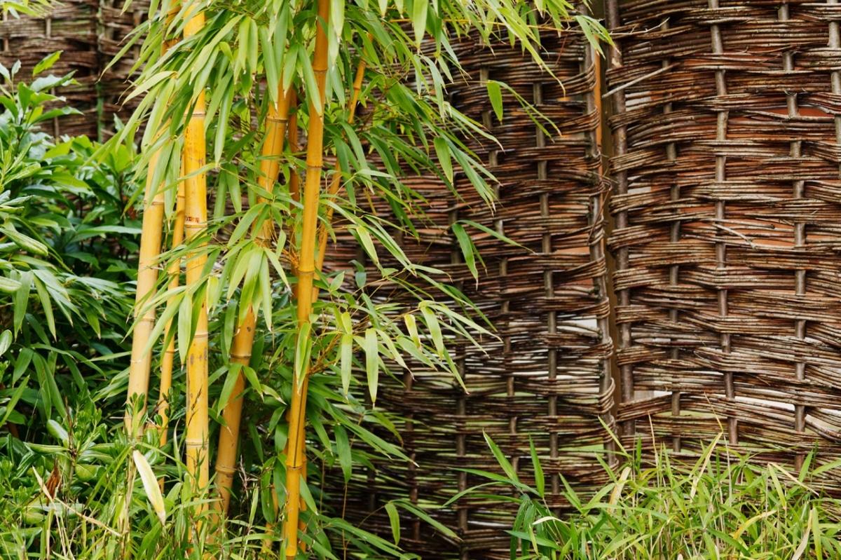 El bambú es una planta de la suerte según el feng shui
