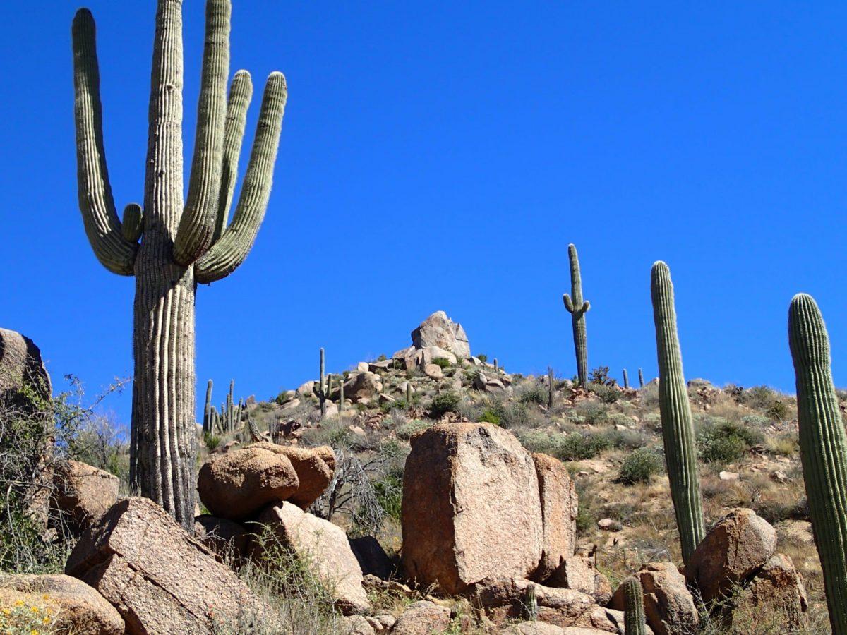Los cactus liberan oxígeno al anochecer