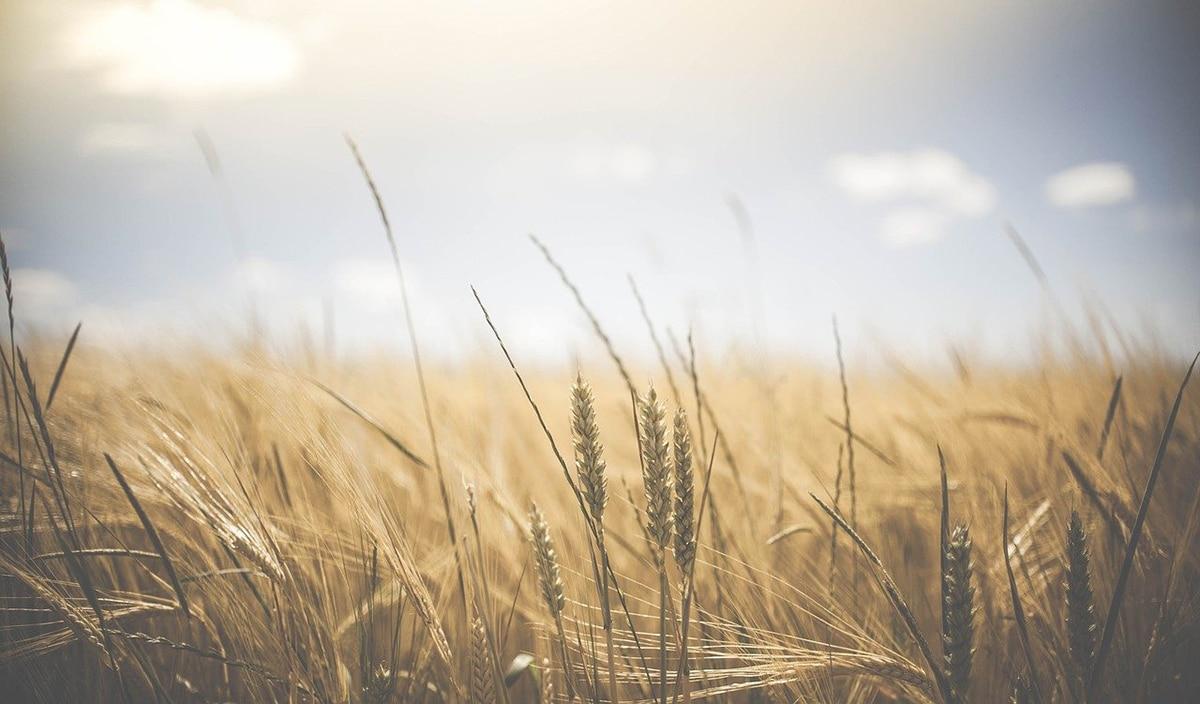 Los cereales son básicos en nuestra dieta