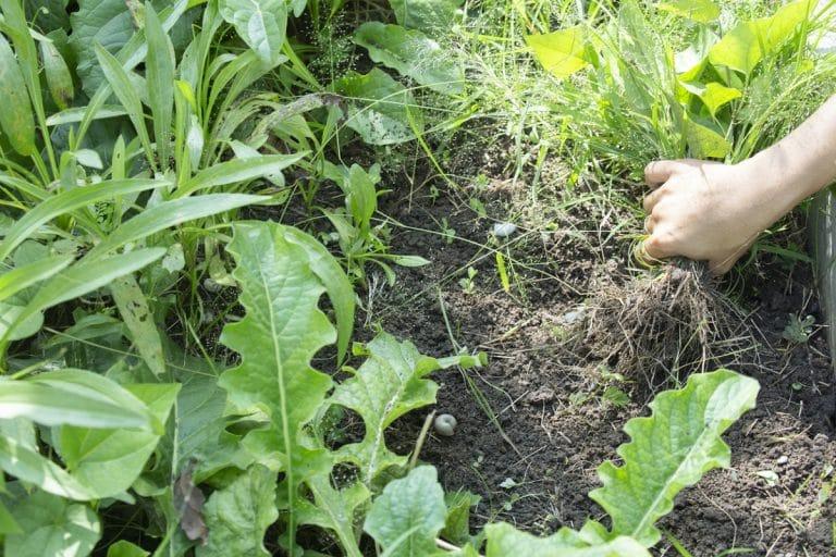 como eliminar las malas hierbas para siempre