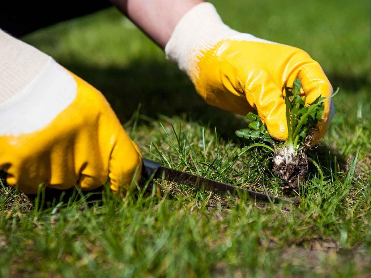 como eliminar las malas hierbas para siempre de forma eficaz