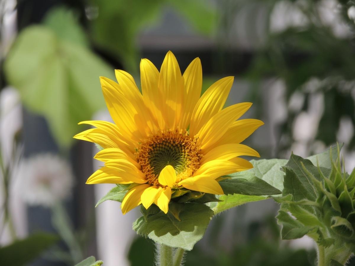 Las plantas al sol se riegan frecuentemente