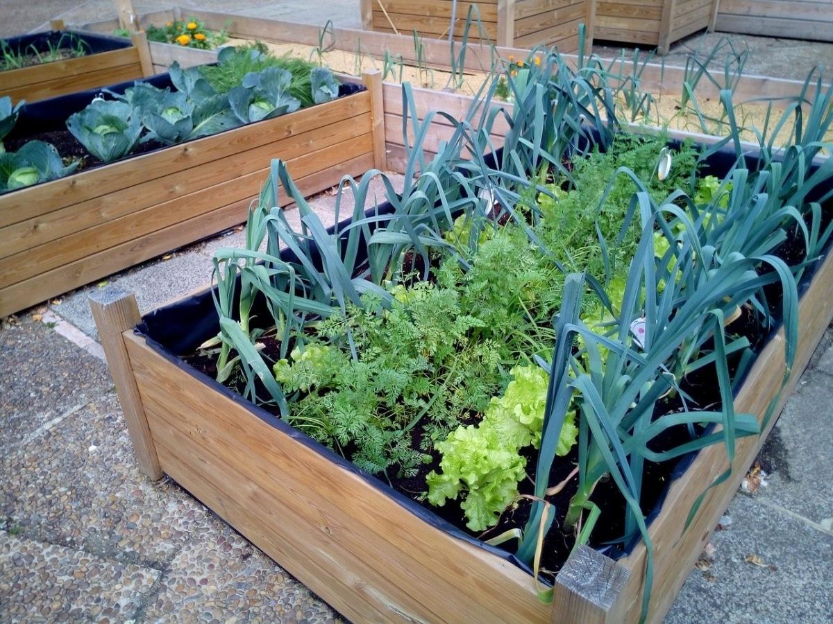 Las hortalizas se cultivan en huertos