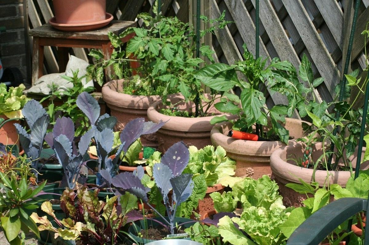 Las frutas y verduras de temporada son las que saben mejor