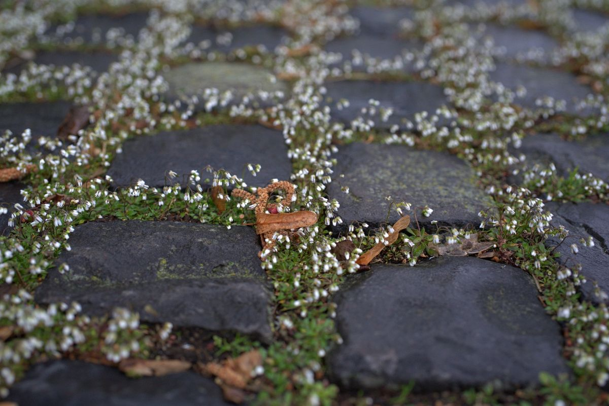 Qué debes tener en cuenta antes de hacer un jardín con piedras