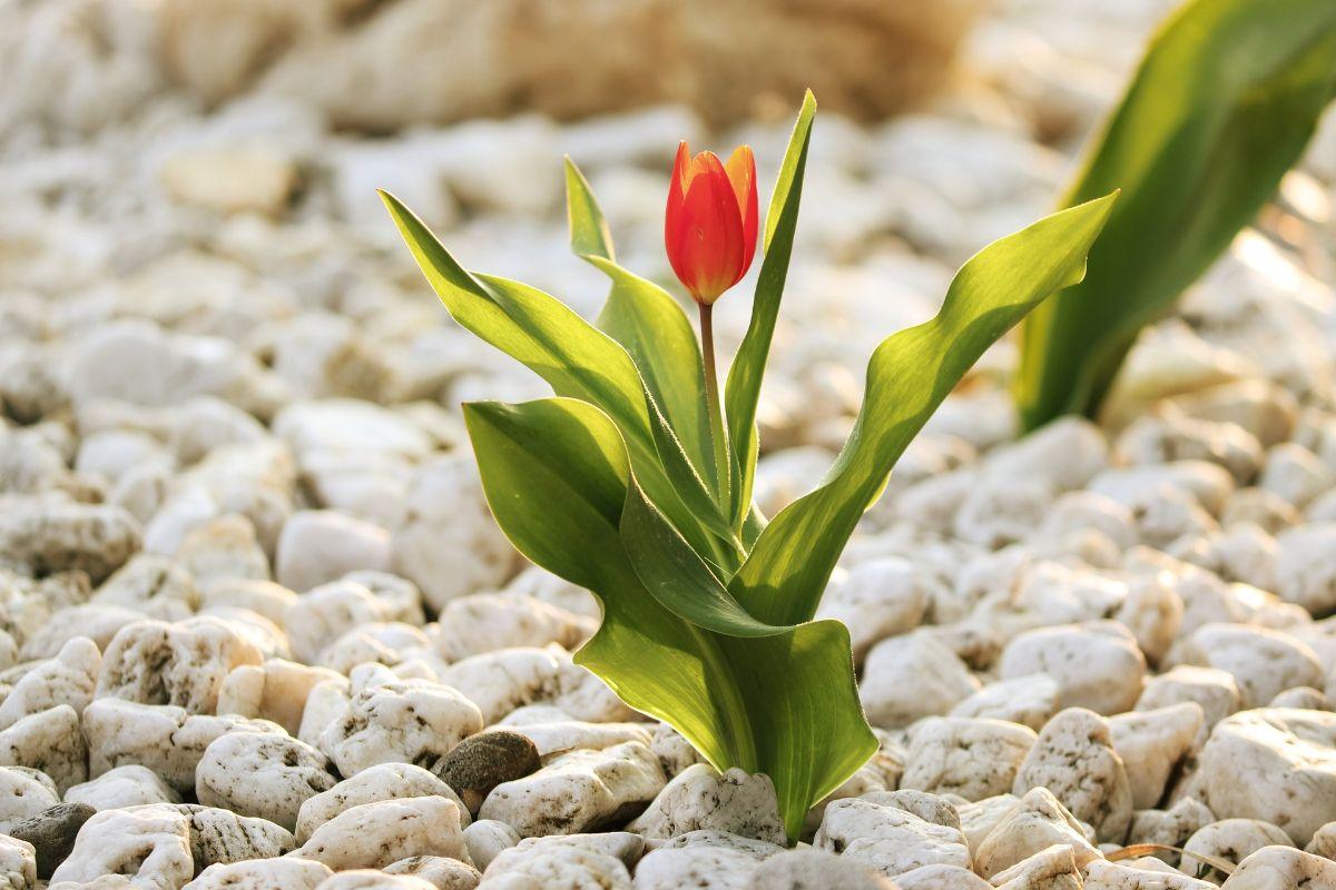 Ideas para jardines con piedras molones