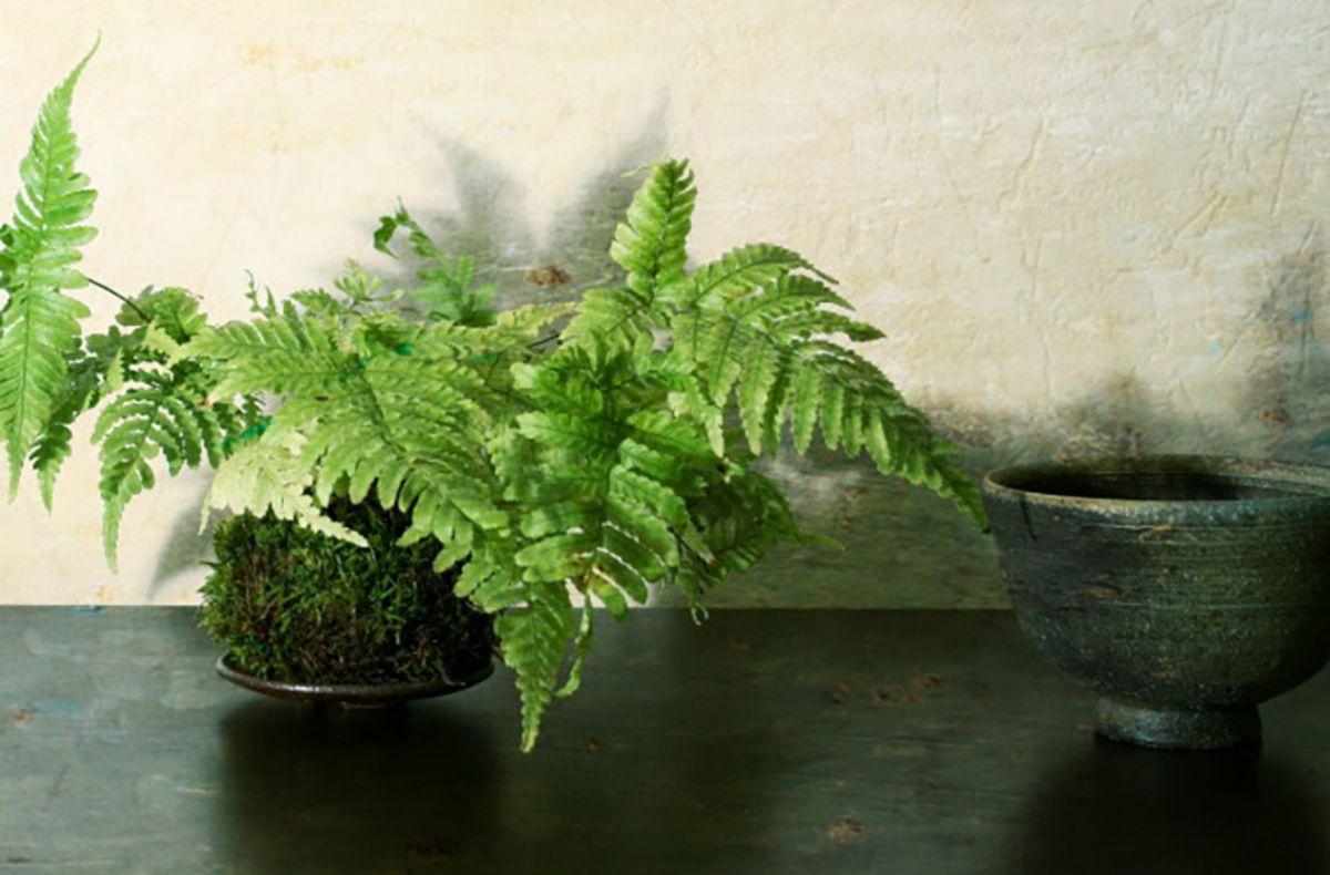 Las mejores plantas para hacer kokedamas