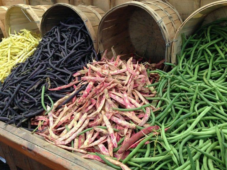 Las leguminosas son plantas que producen legumbres