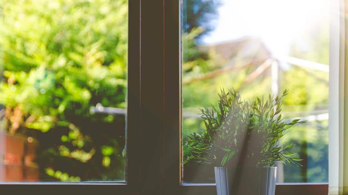 Una planta quemada por el sol puede recuperarse a veces