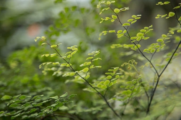 Hay muchas plantas con hojas pequeñas