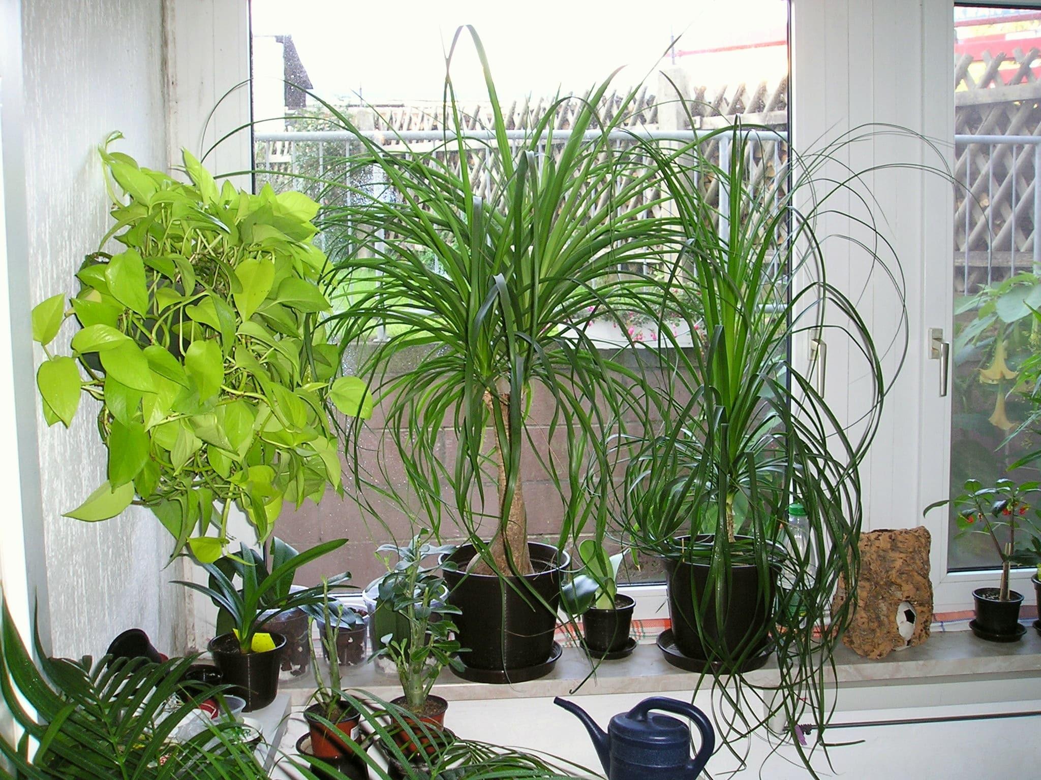 La falta de espacio detiene el crecimiento de las plantas