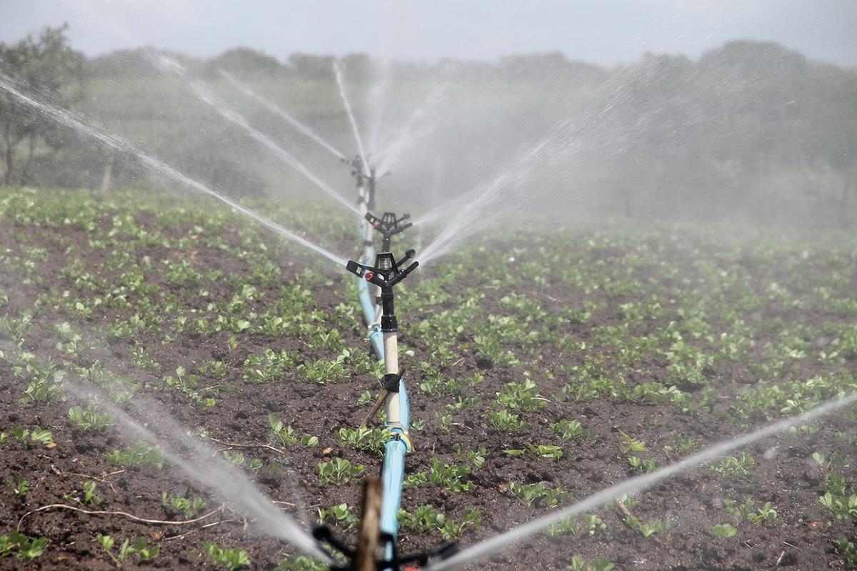 El ácido fosfórico agrícola tiene ventajas e inconvenientes