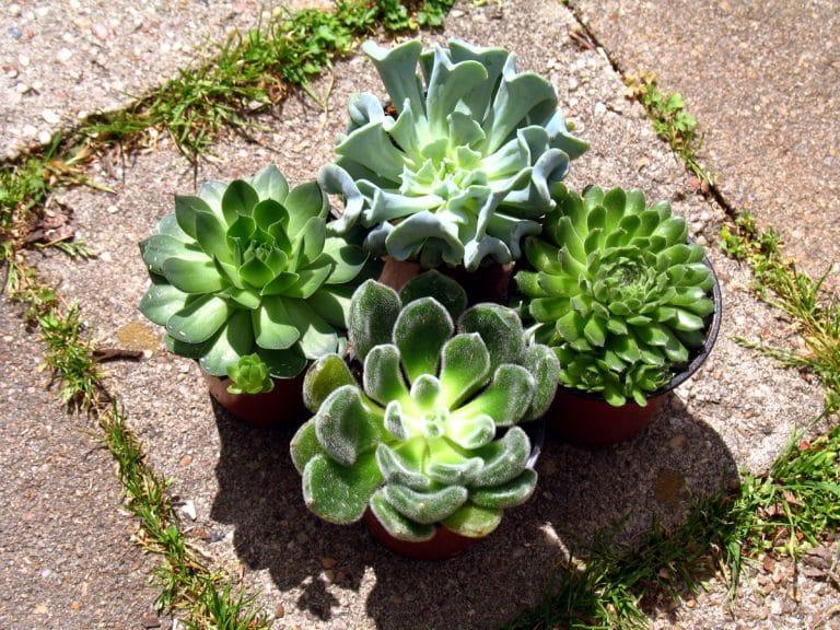 Las plantas que están al sol se riegan por la tarde