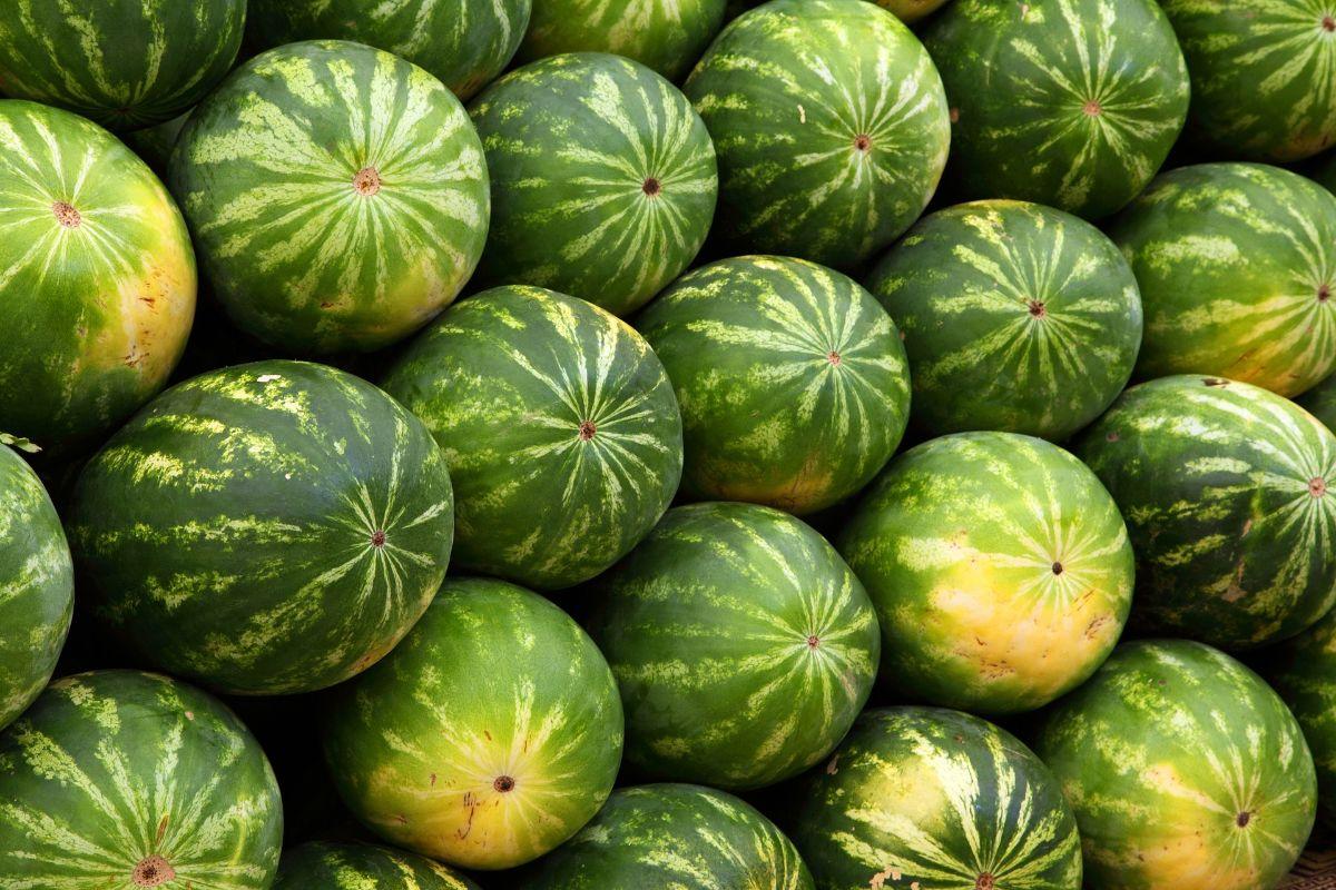 La sandía: la fruta preferida en verano