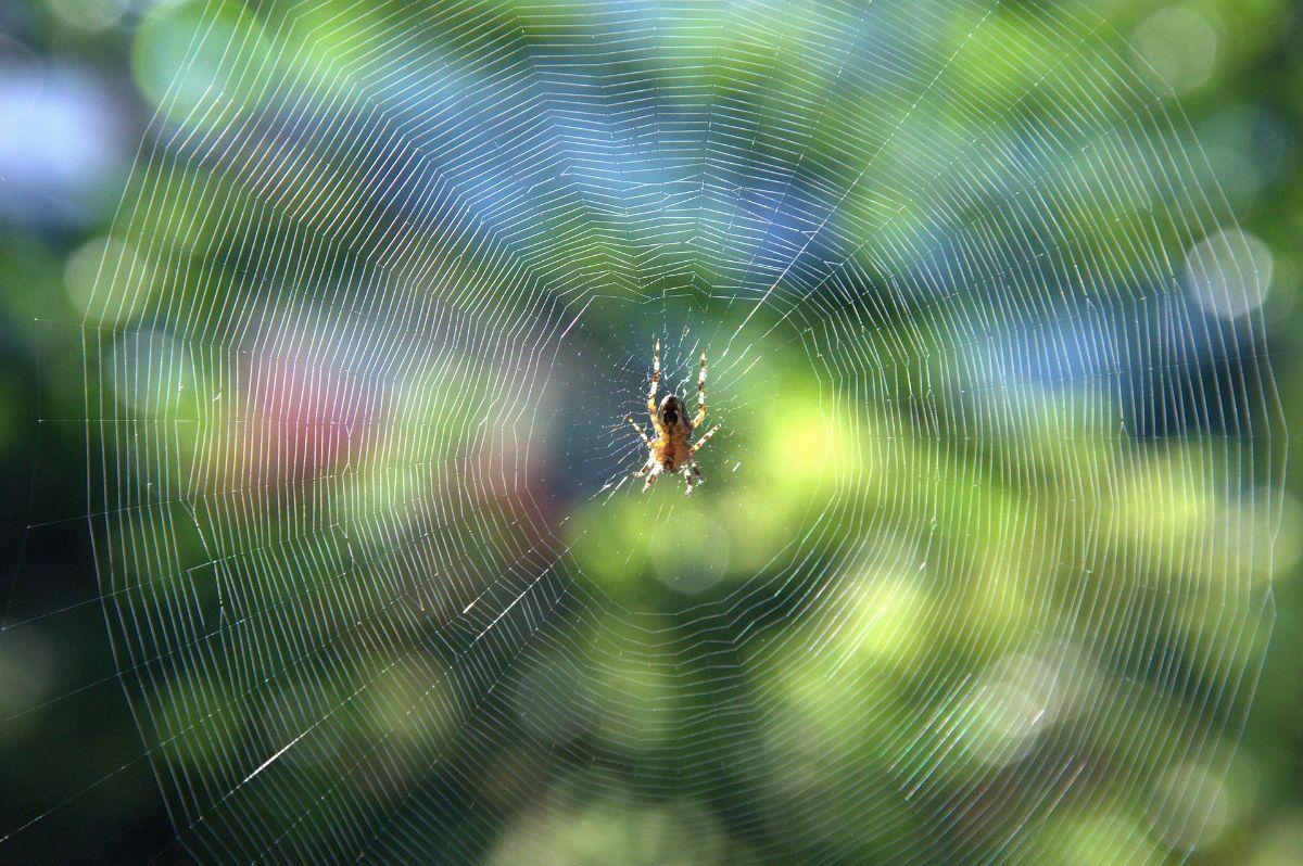 Arañas en el jardín