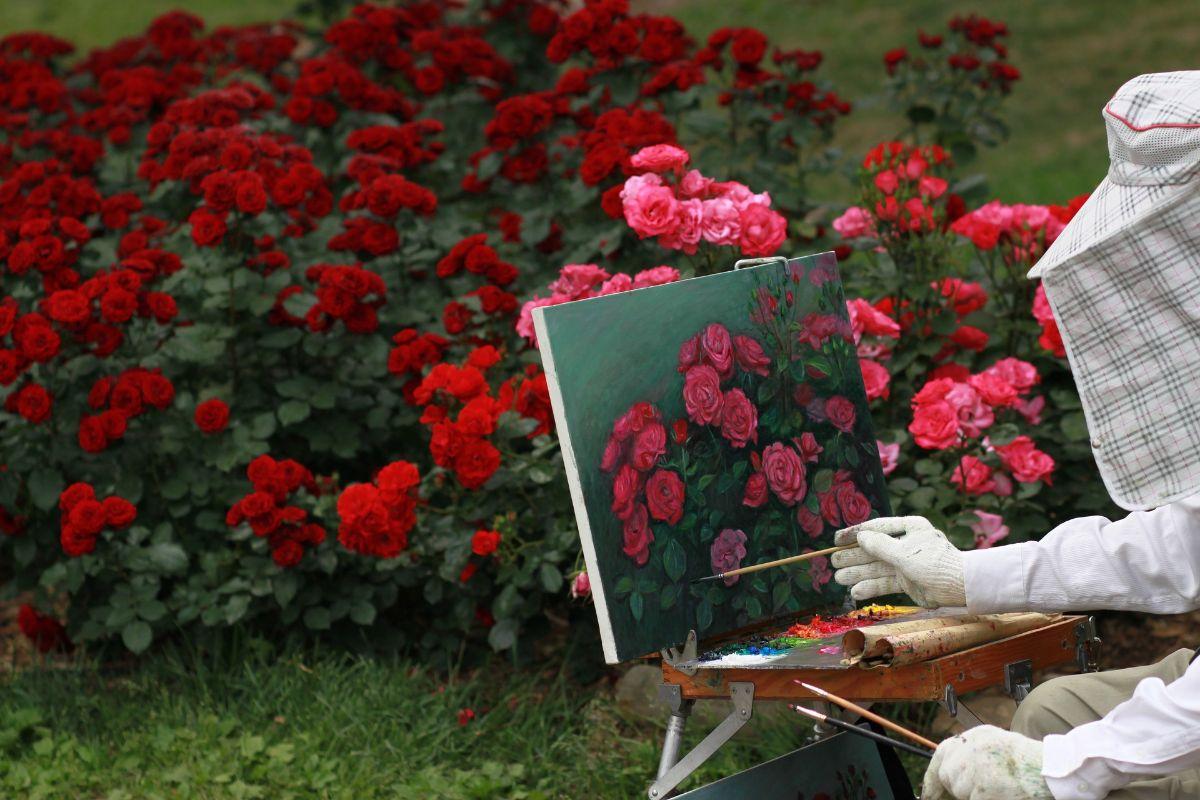 Cómo cuidar un jardín de rosas