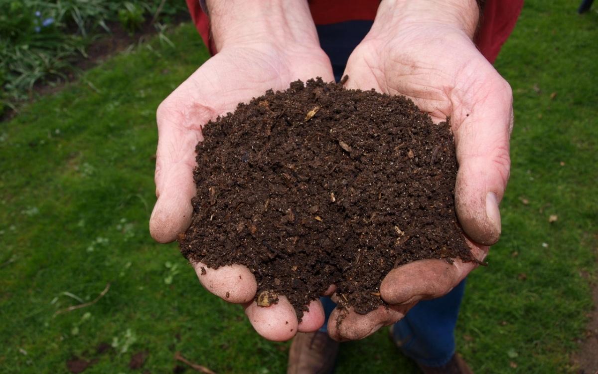 El humus de lombriz mejora las características del suelo