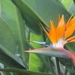 La flor ave del paraíso es compleja