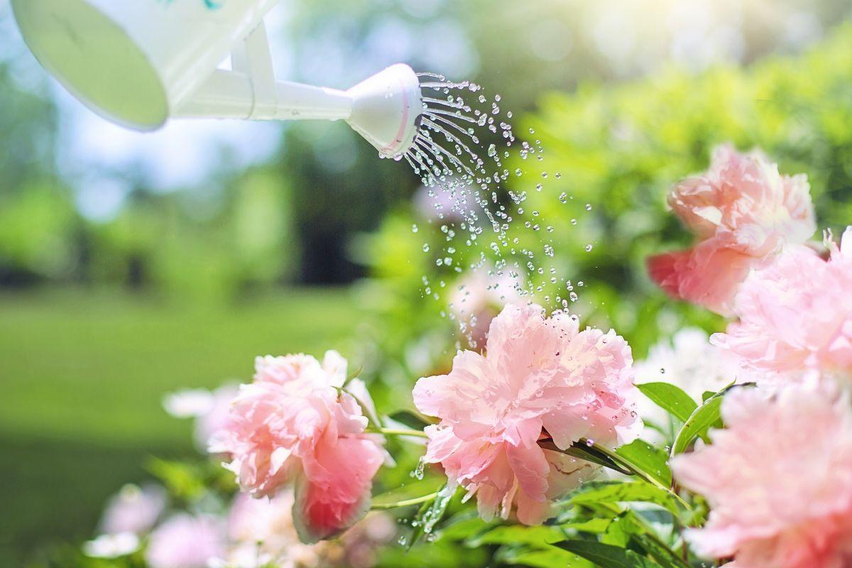 Beneficios de la jardinería para discapacitados