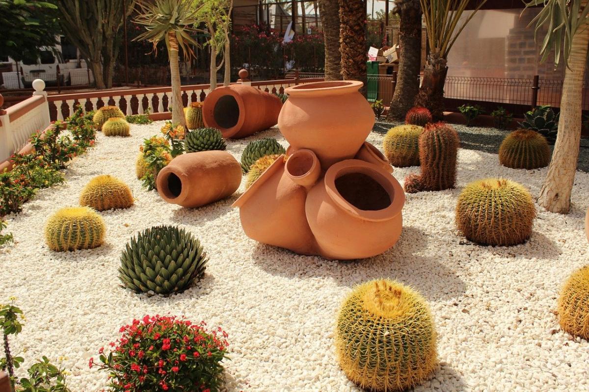 Los cactus son ideales para jardines secos