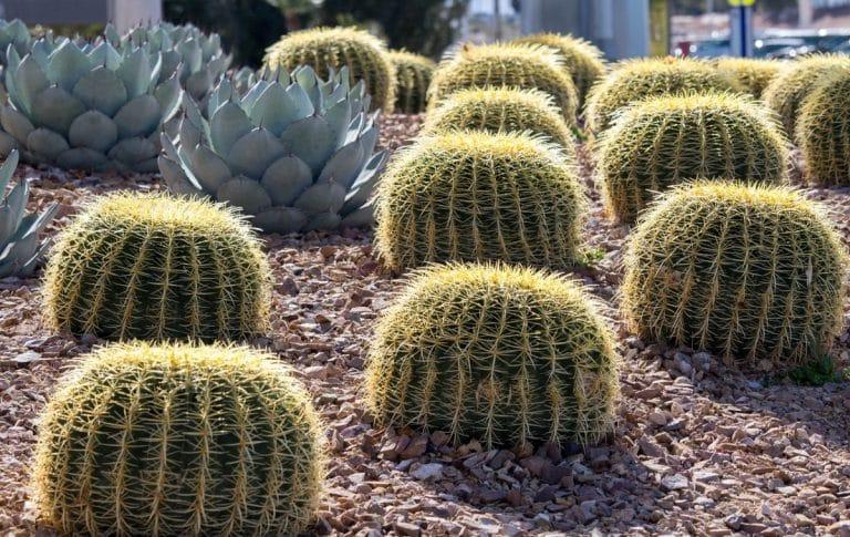 Los cactus y crasas necesitan cuidados especiales en otoño e invierno