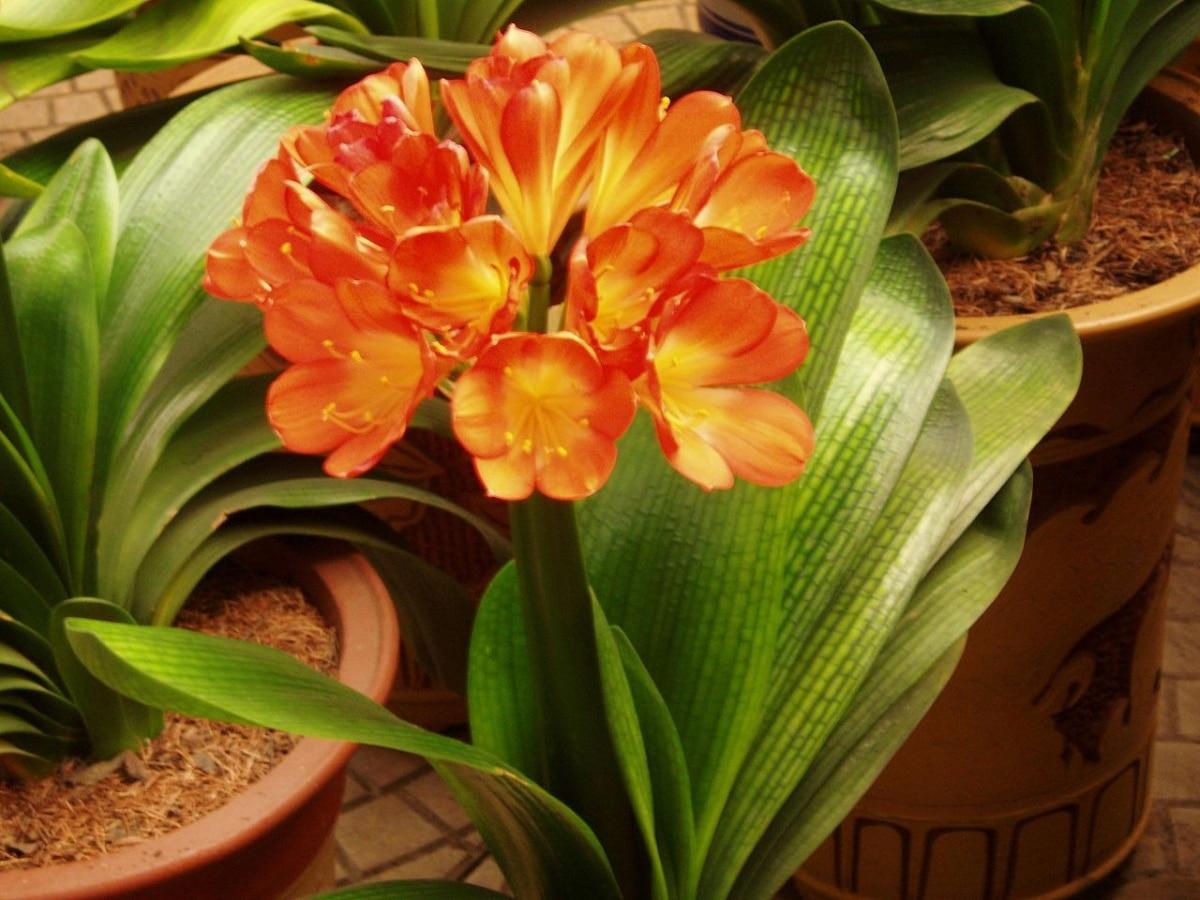 Las plantas necesitan espacio para florecer