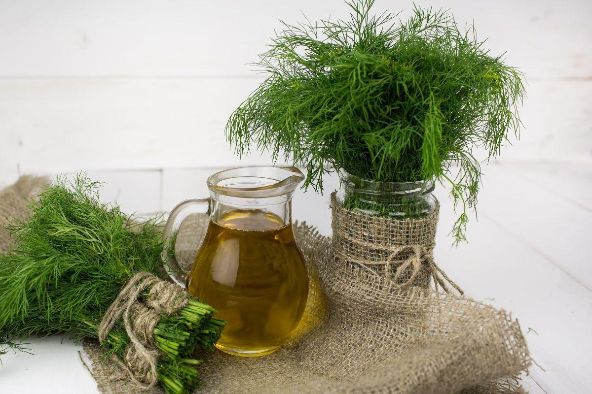 Plantas aromáticas, ¿por qué son difíciles de cultivar?