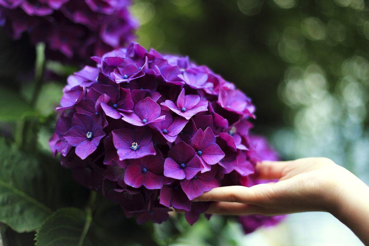 Flores para plantar en septiembre