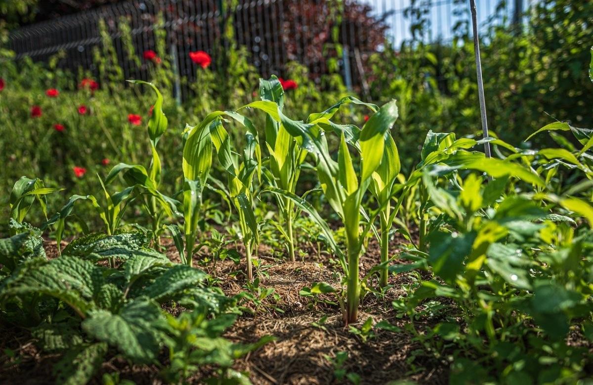 El calendario biodinamico es útil para cultivar plantas