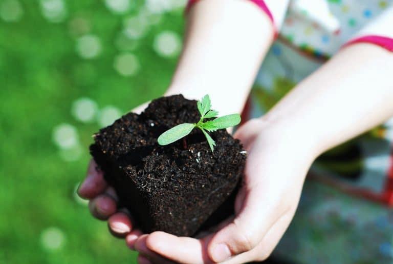 Se puede aprender a cuidar plantas desde joven