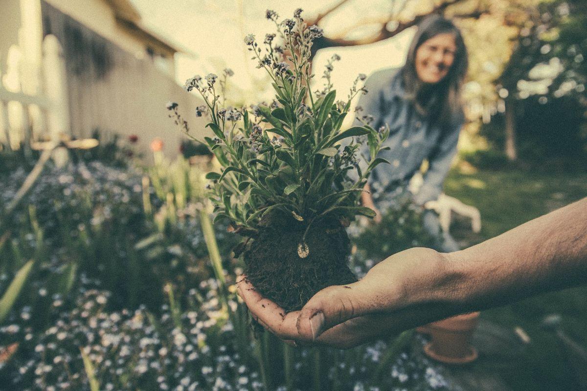 Qué es la jardinería para discapacitados