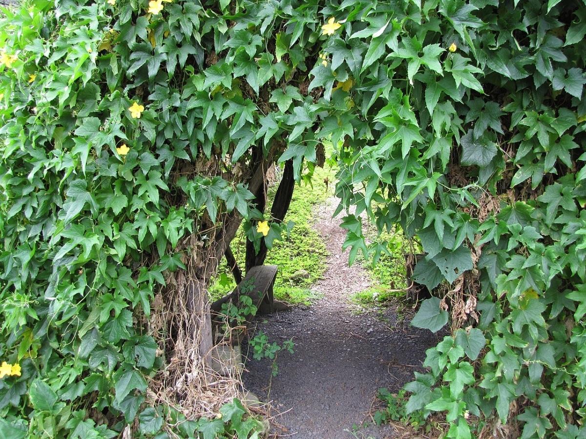 La luffa es una planta anual