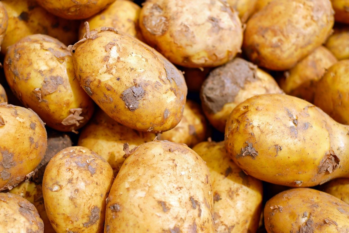 sembrar patatas en septiembre