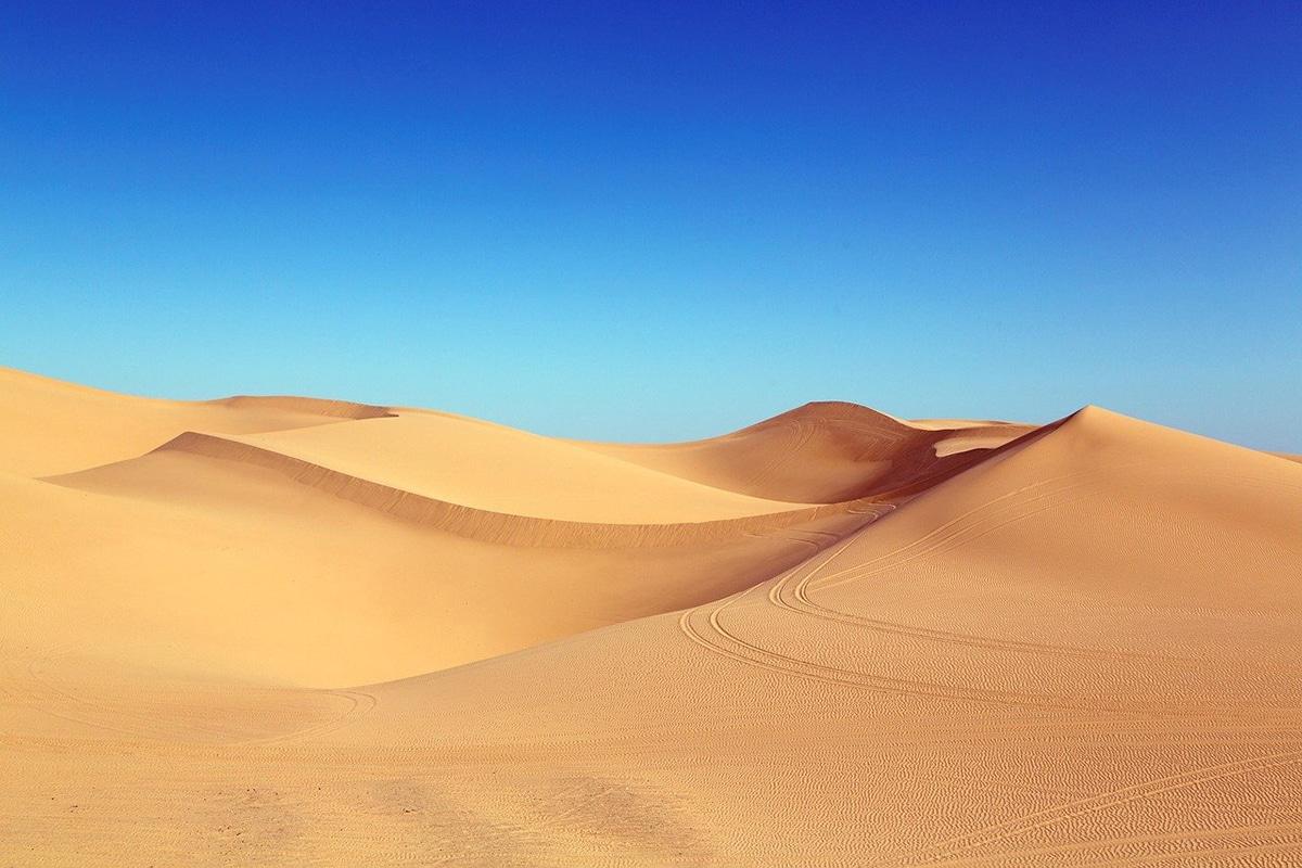 Sin vegetales, la tierra sería un gran desierto