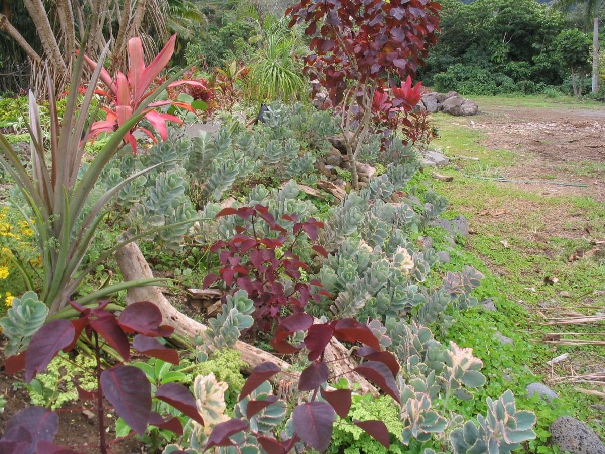 Un jardín seco es perfecto para climas donde llueve poco