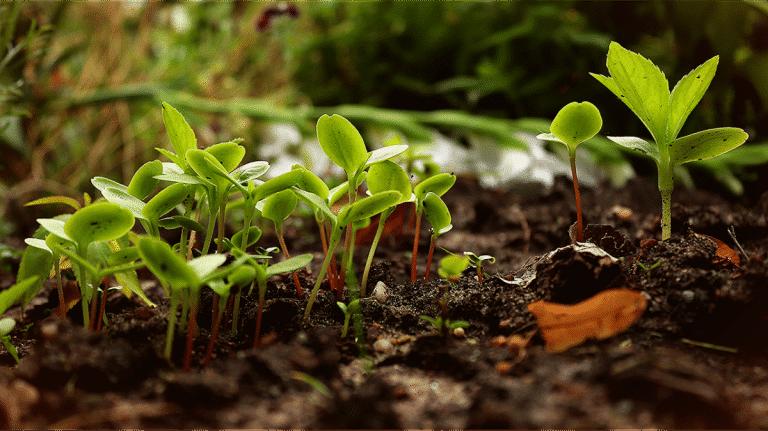 Las semillas germinan si son viables