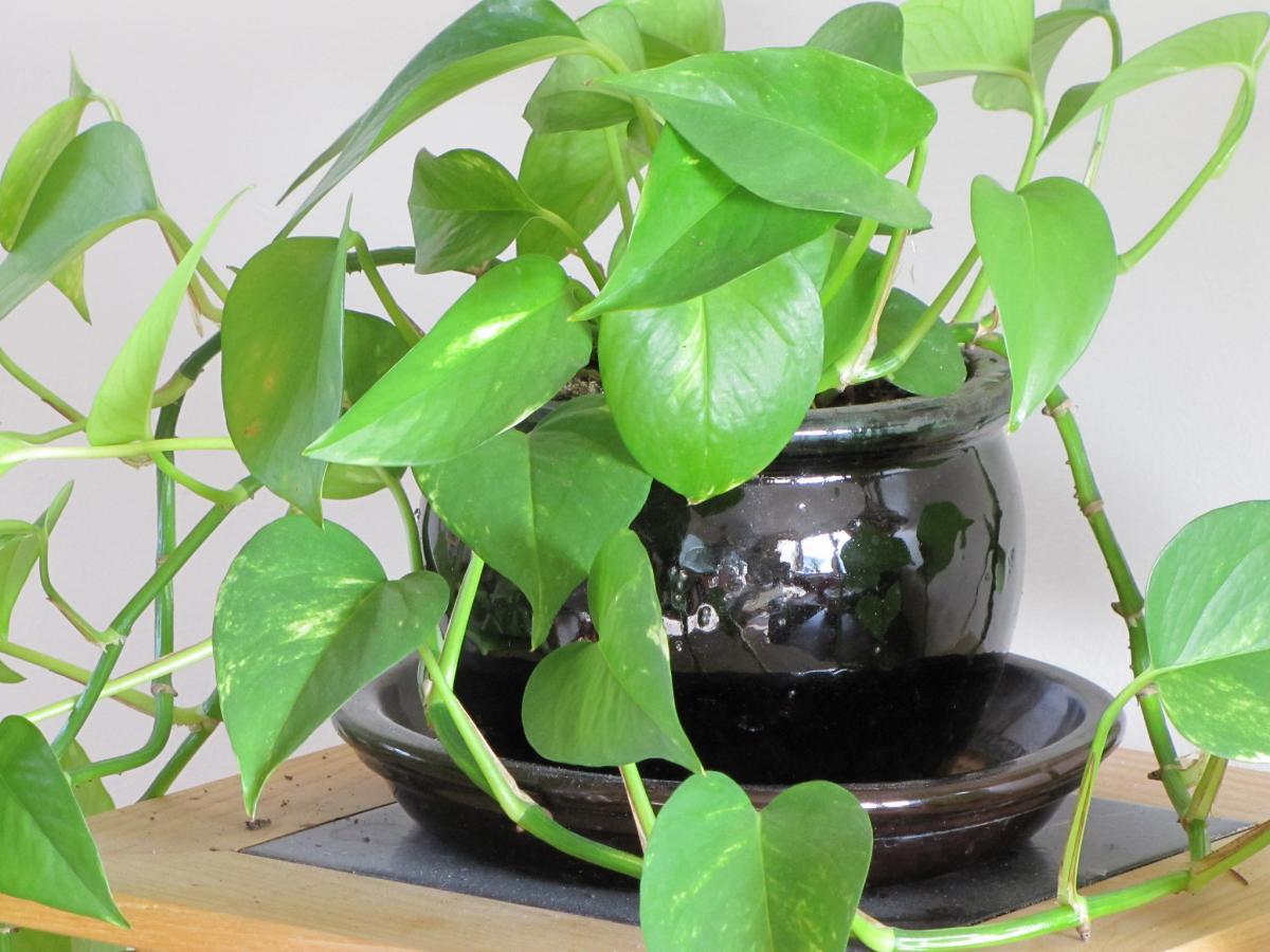 Las plantas de interior pueden sufrir por exceso de agua
