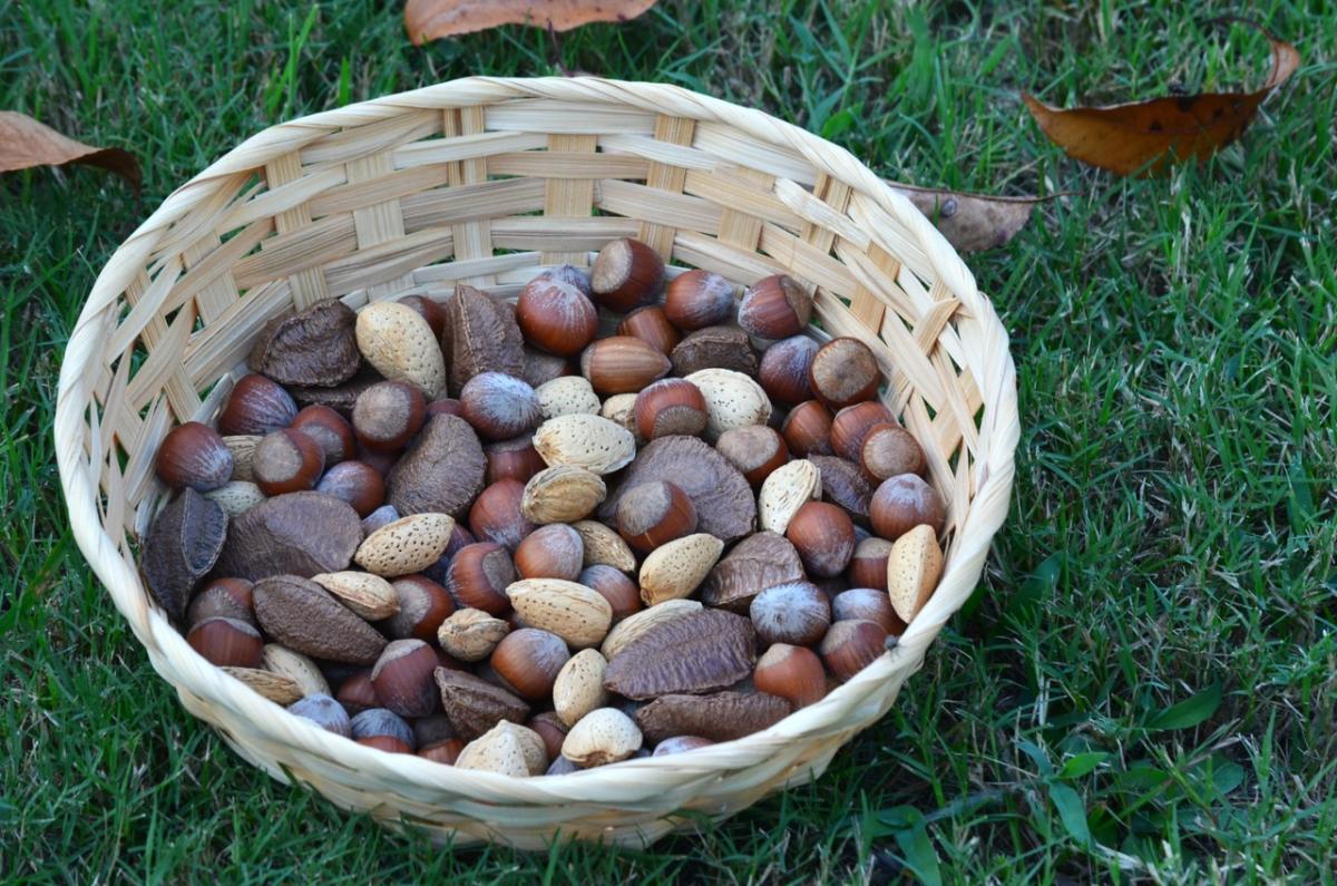 Los tratamientos pregerminativos ayudan a las semillas a germinar