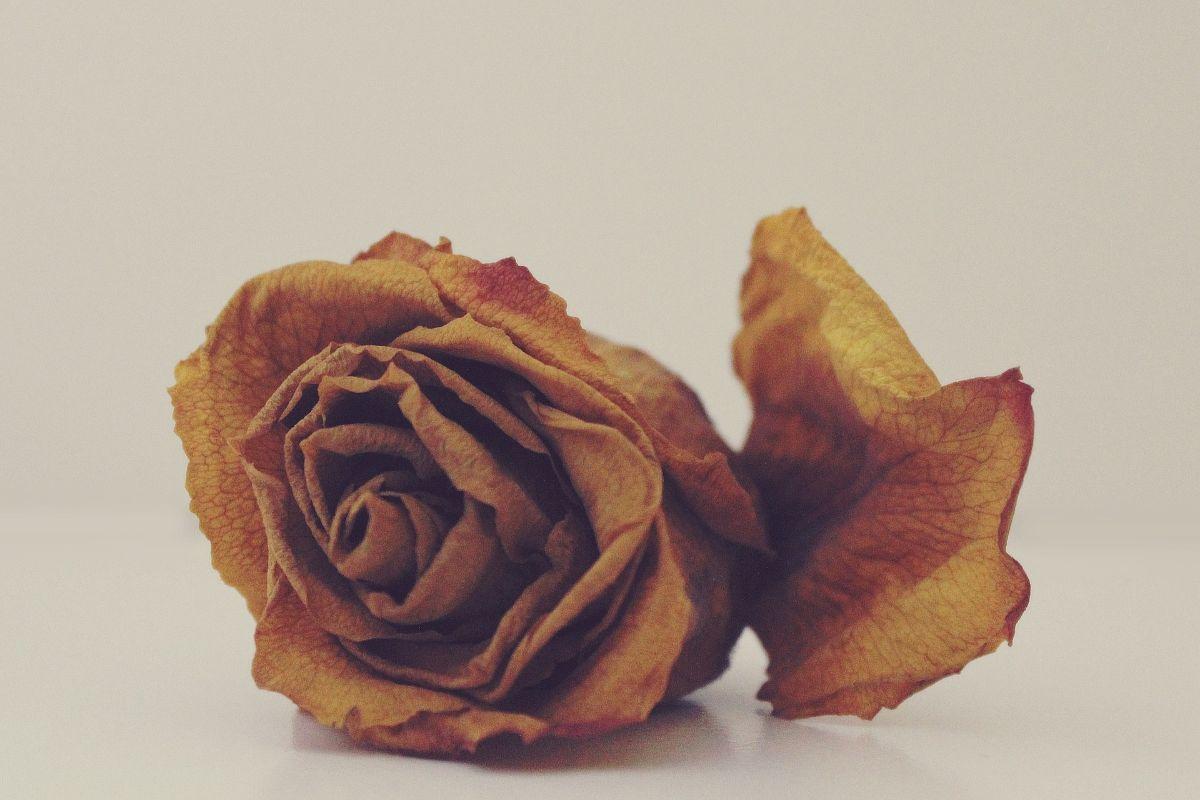 Para qué puedes usar las flores muertas