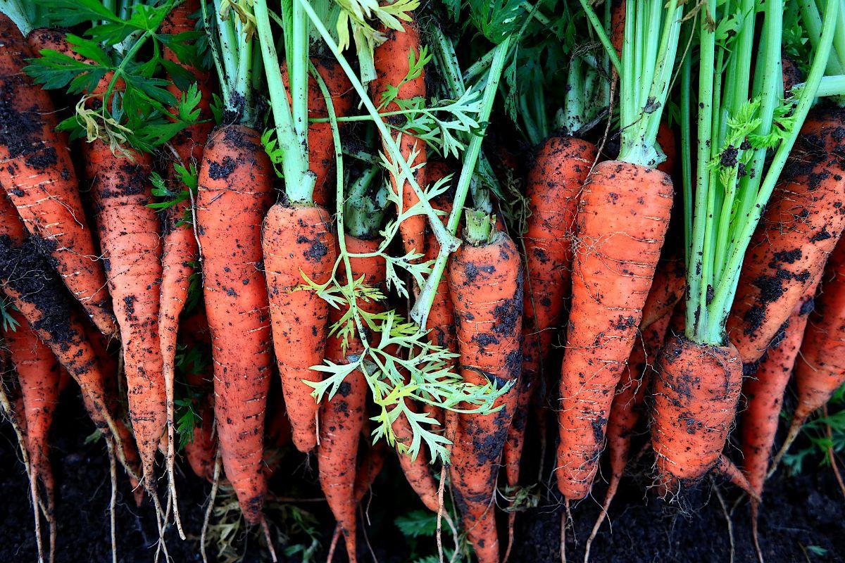 Qué hortalizas y verduras se pueden plantar en septiembre